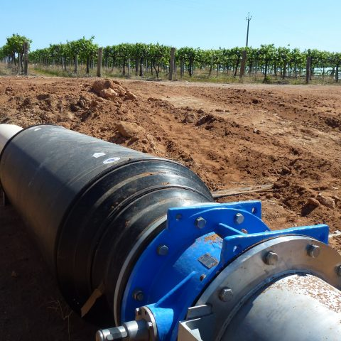blocked irrigation systems, algae, salinity, grapes